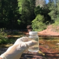 Water Quality of Oak Creek and Fossil Creek 2018-2019
